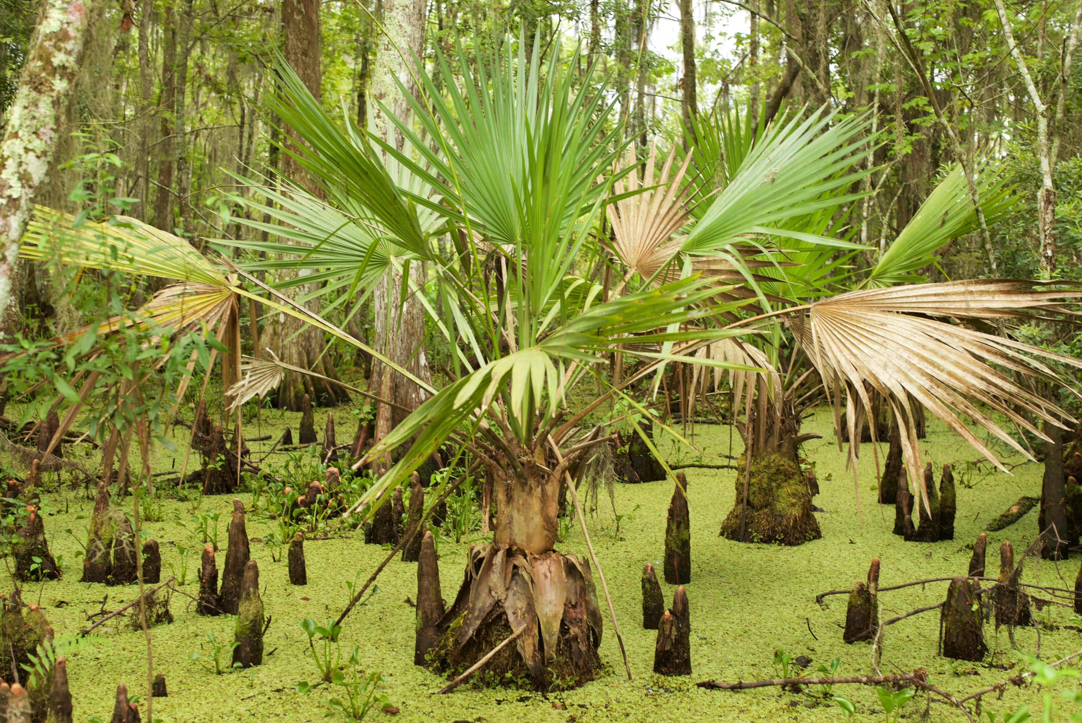 New Orleans, swamp