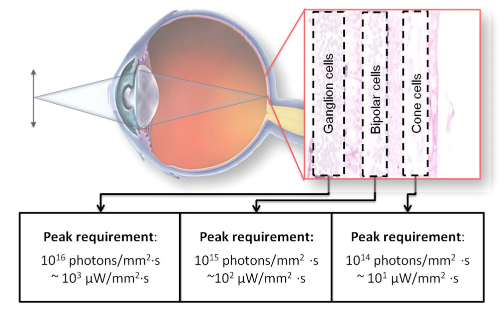 Optogenetic approaches to retinal prosth
