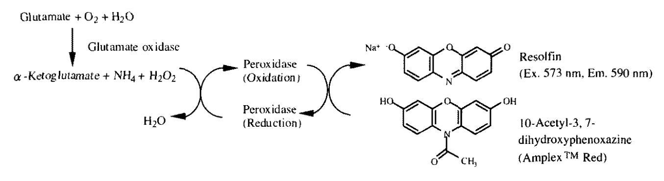 Enzyme-Linked Sensitive Fluorometric Ima