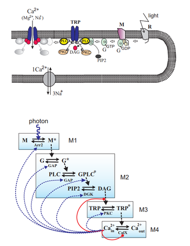 A stochastic model of the single photon