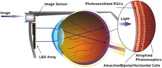 A CMOS image sensor with light-controlle