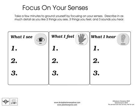Brain team T2 Focus on senses.jpg