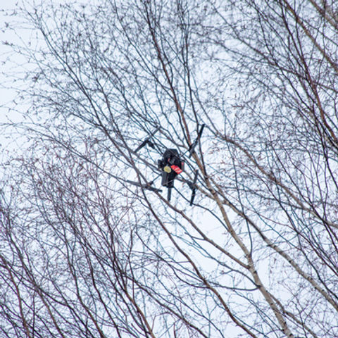 how-to-get-a-drone-out-of-a-tree-1.jpg