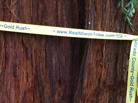 Clay Street Coast Redwood