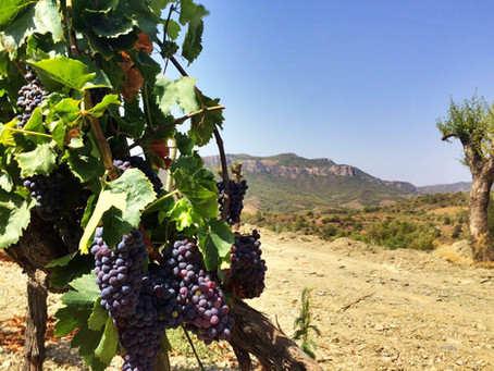 The Undiscovered Wine Regions of Spain