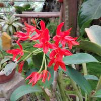蘭の花2.jpg