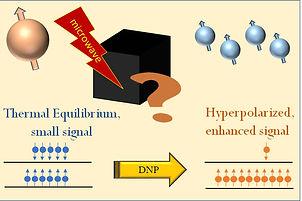 DNP spin dynamics.jpg