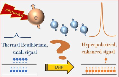 Main DNP figure.jpg