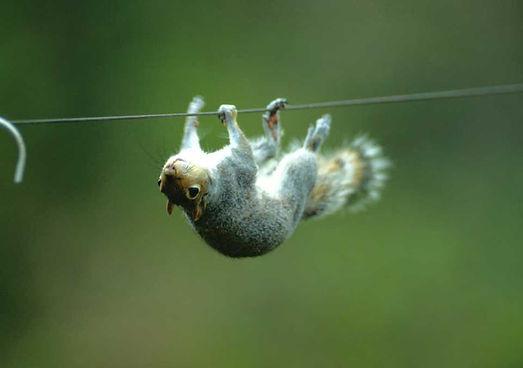 new squirrel.jpg