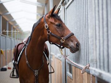 Holly goes international! Partner Pferd Leipzig