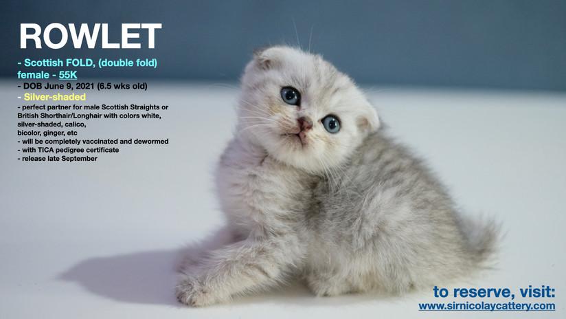 AVAILable kitties July 25.011.jpeg
