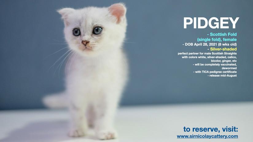 Pidgey 8 weeks (1)