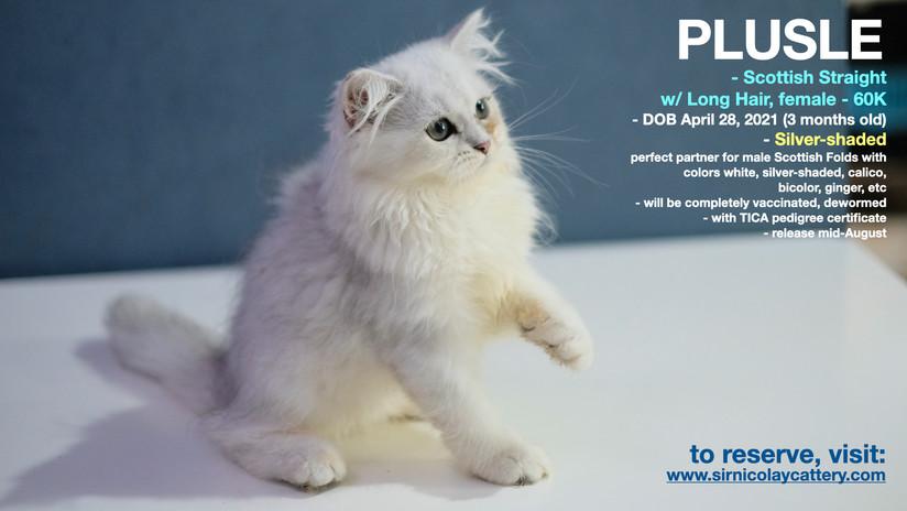 AVAILable kitties July 25.001.jpeg