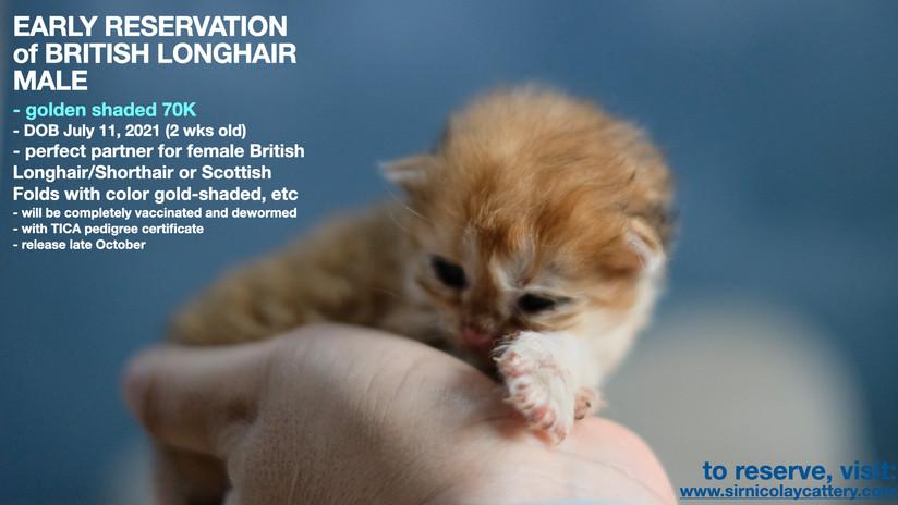 AVAILable kitties July 25.014.jpeg