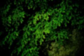 Walled Ferns.jpg