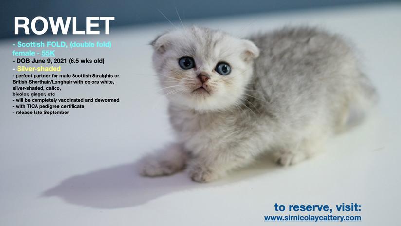 AVAILable kitties July 25.010.jpeg
