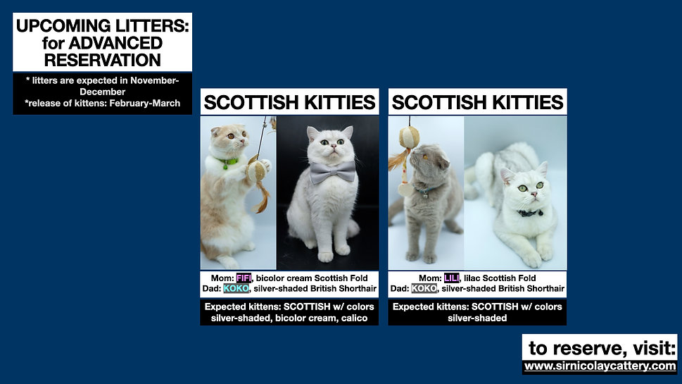 Available Kittens 4th Q 2021.003.jpeg