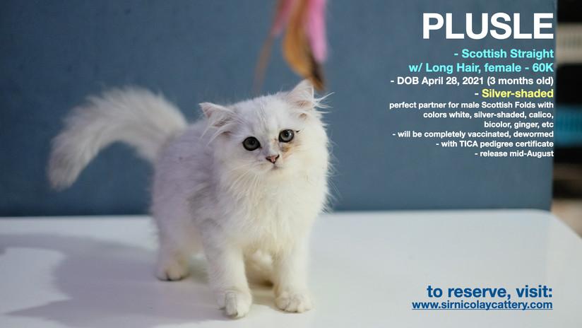 AVAILable kitties July 25.003.jpeg