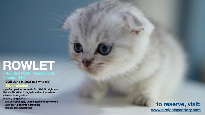 AVAILable kitties July 25.012.jpeg