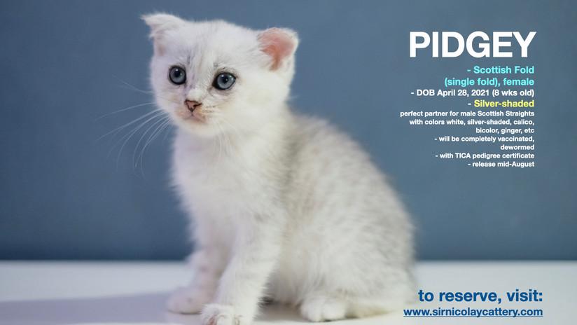 Pidgey 8 weeks (3)