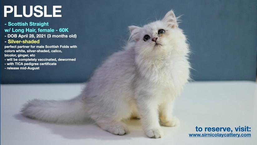 AVAILable kitties July 25.002.jpeg