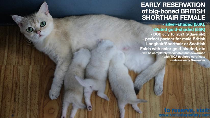 AVAILable kitties July 25.016.jpeg