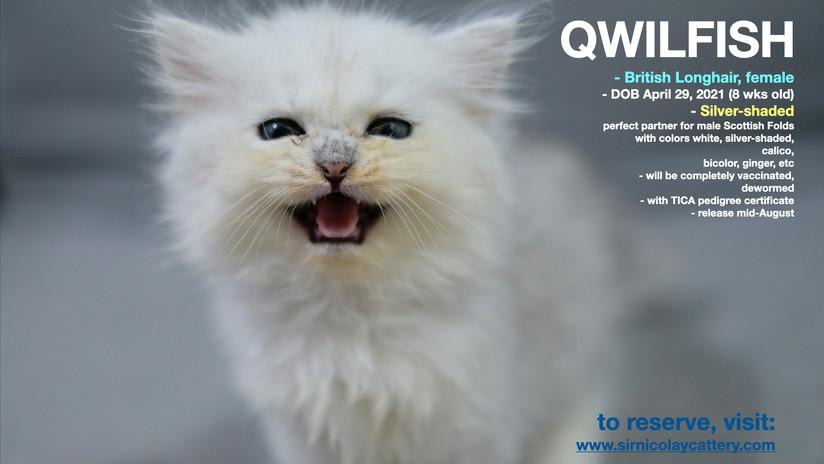 Qwilfish 8 weeks (4)