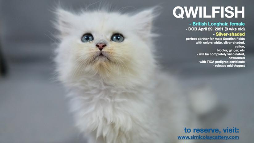 Qwilfish 8 weeks (1)
