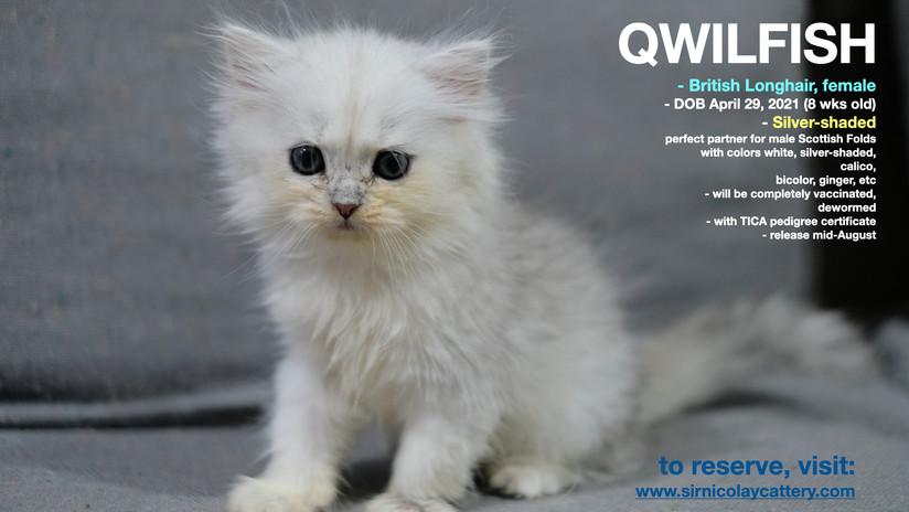 Qwilfish 8 weeks (3)