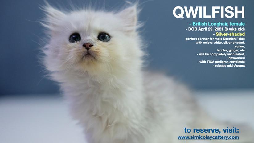 Qwilfish 8 weeks (2)