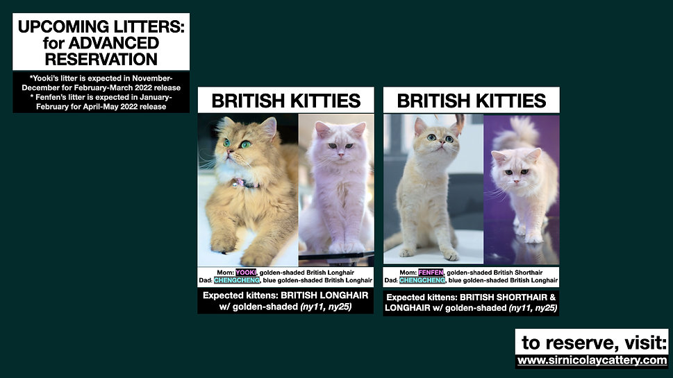 Available Kittens 4th Q 2021.004.jpeg