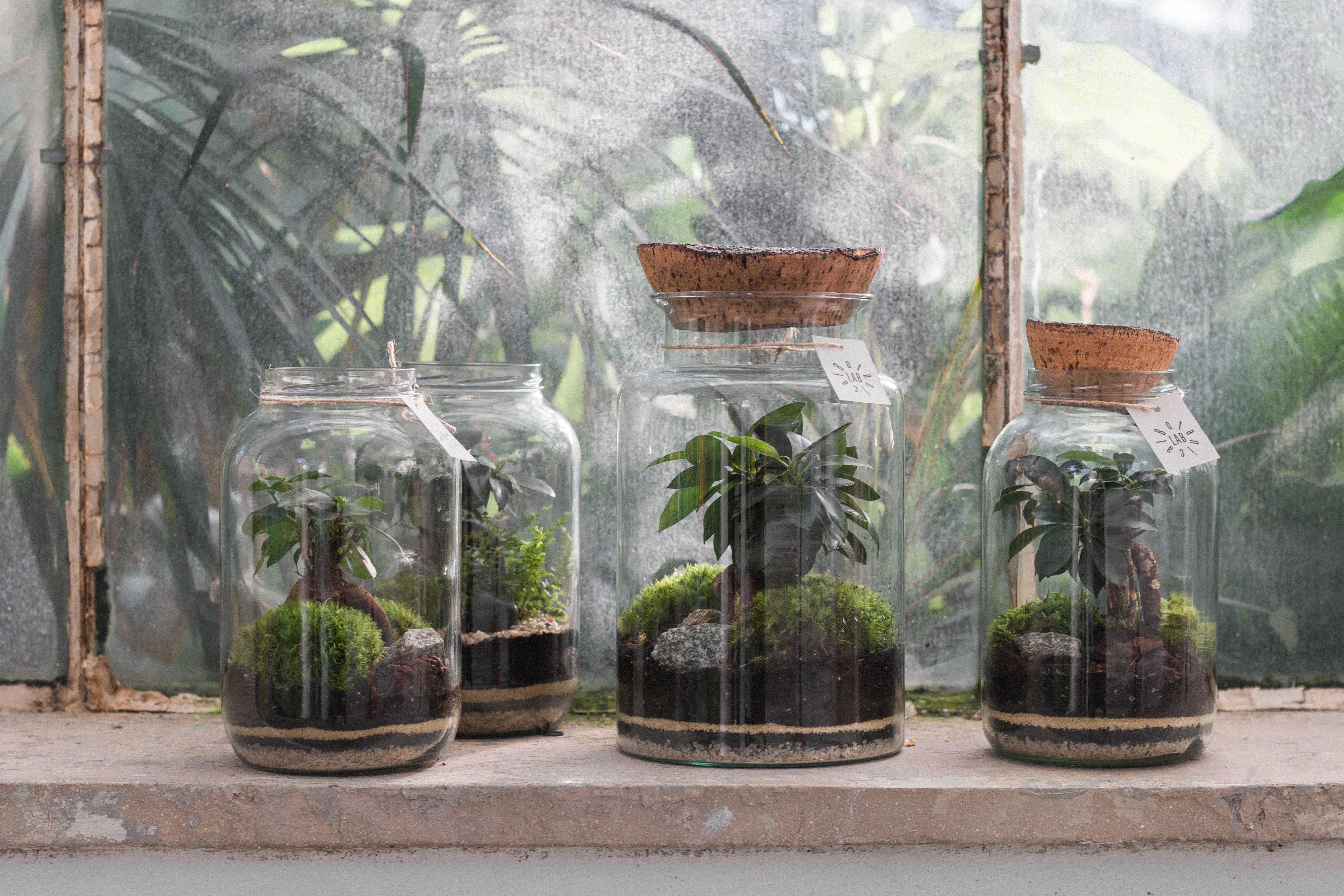 4_rastlinné teráriá_Botanical Lab