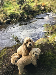 Alfie and Chloe walking near Postbridge, Dartmoor