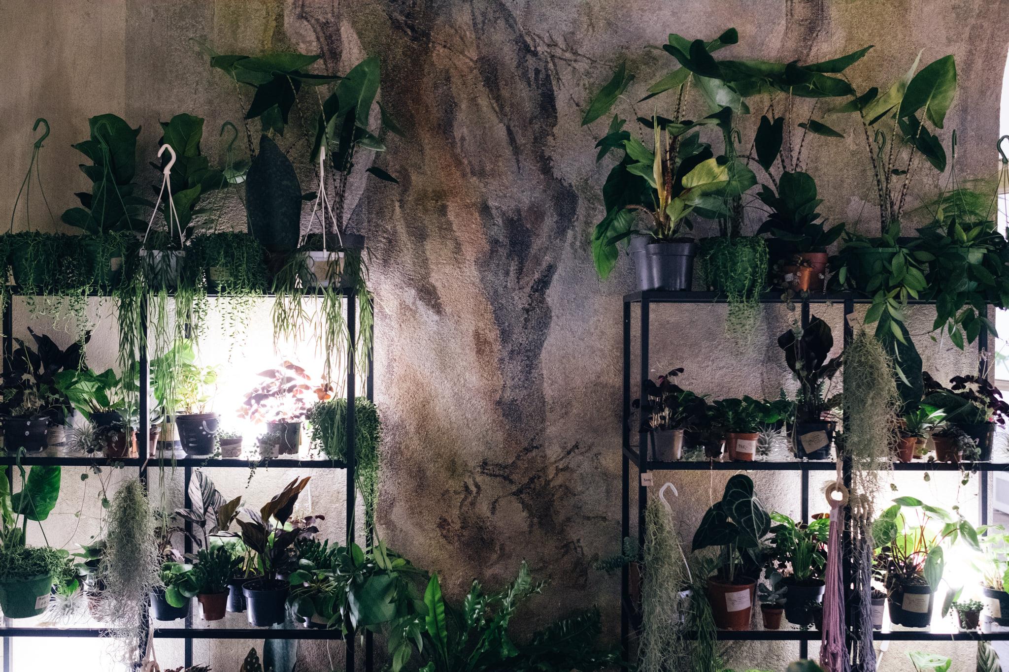 Plantologie