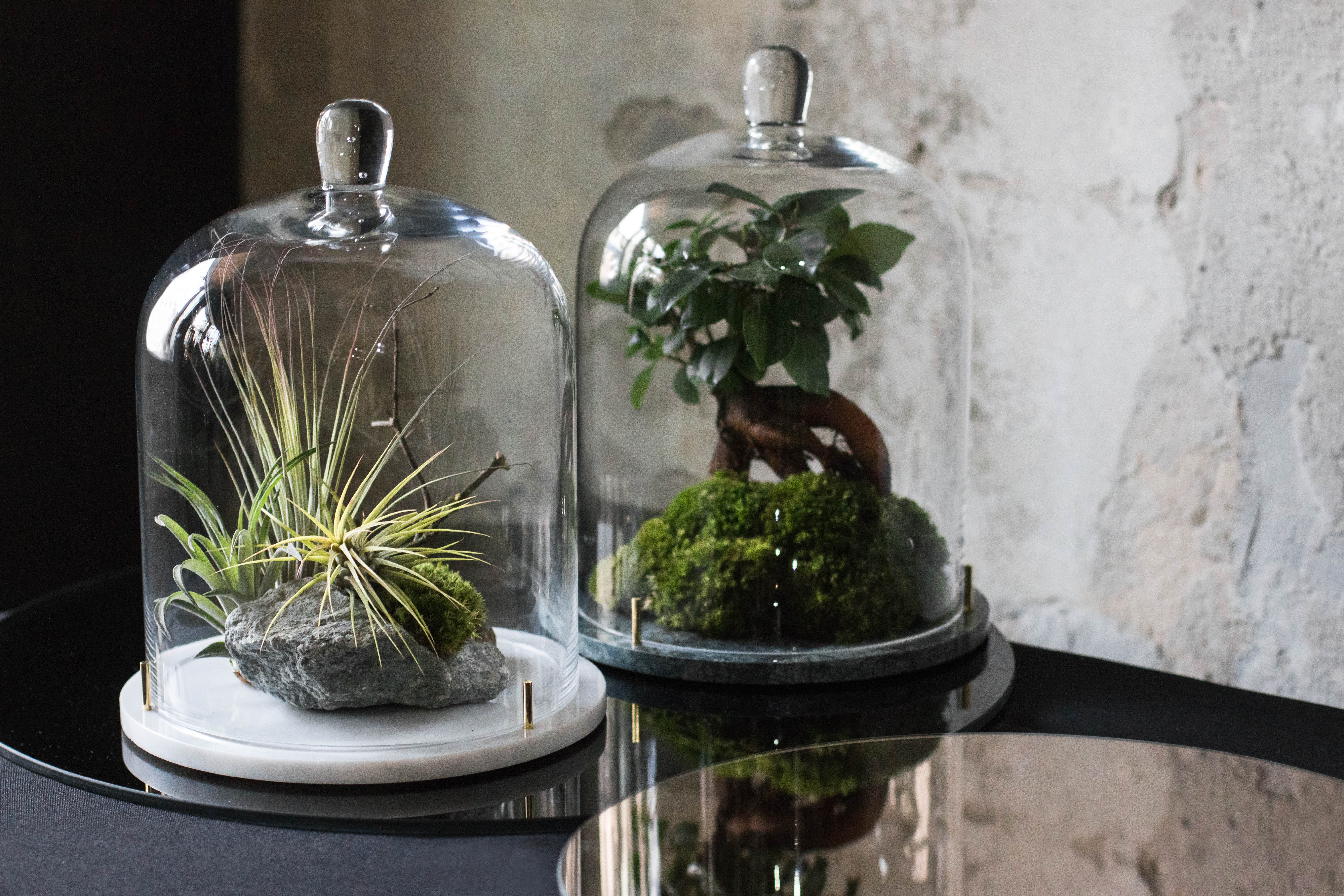 1_marble terrariums MetaformiXBotanical