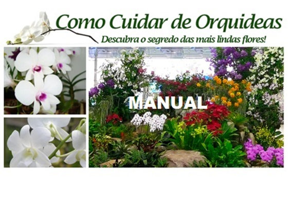 Manual Como Cuidar de Orquídeas