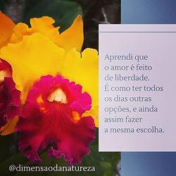 Mensagem | A Essencia do Amor | Orquídea | Foto Robriane Lara