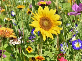 Flores que Florescem o Ano Todo