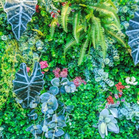 Jardim Vertical | Alocásia Amazônica