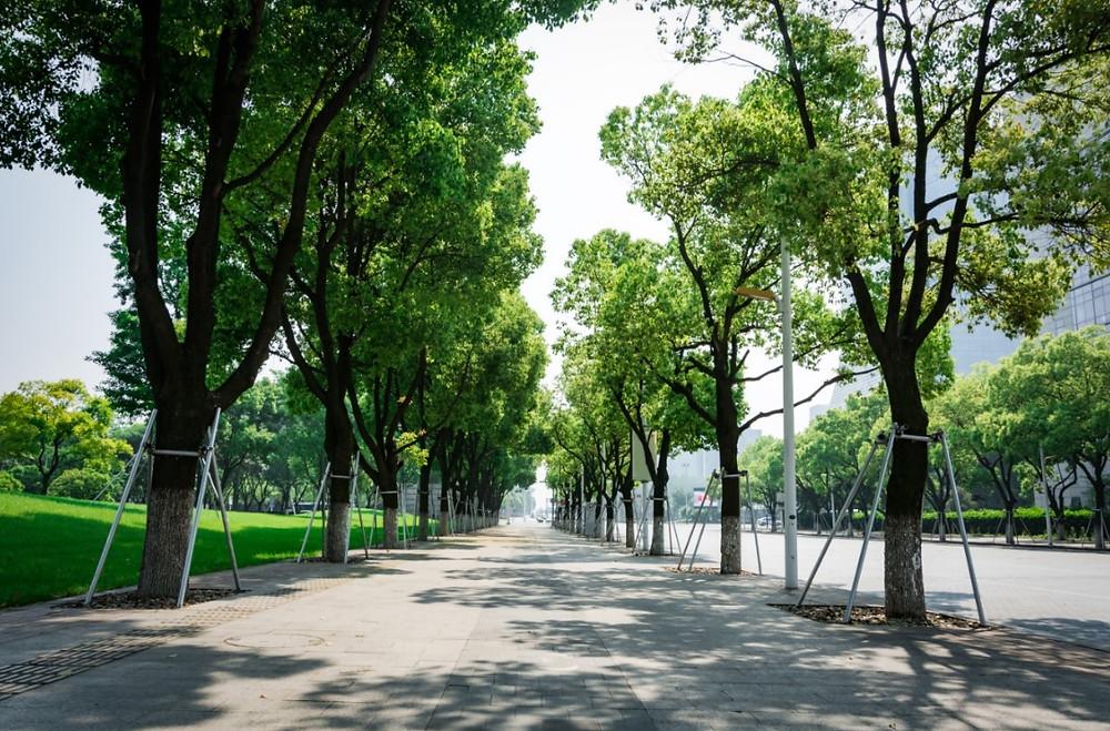 Calçada larga, acessível e arborizada | Foto Freepik