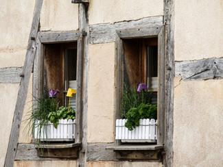 5 Dicas de Jardinagem para Quarentena