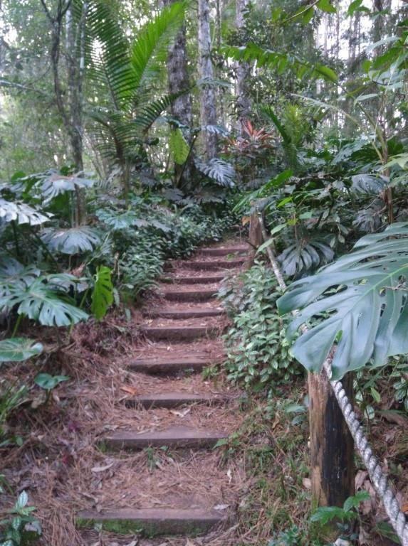 © Escada na natureza | Foto de Robriane Lara