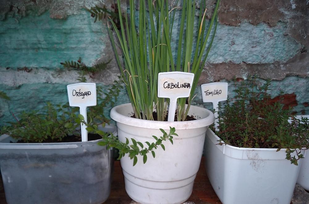 Horta em vasos reciclados suspensa | Orégano, Cebolinha e Tomilho | Foto Robriane Lara ©