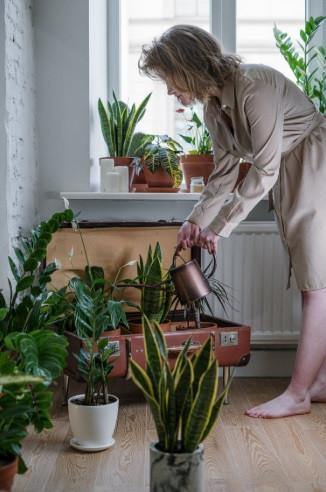 Jovem mulher irrigando o jardim interno em casa | Foto de Cottonbro no Pexels