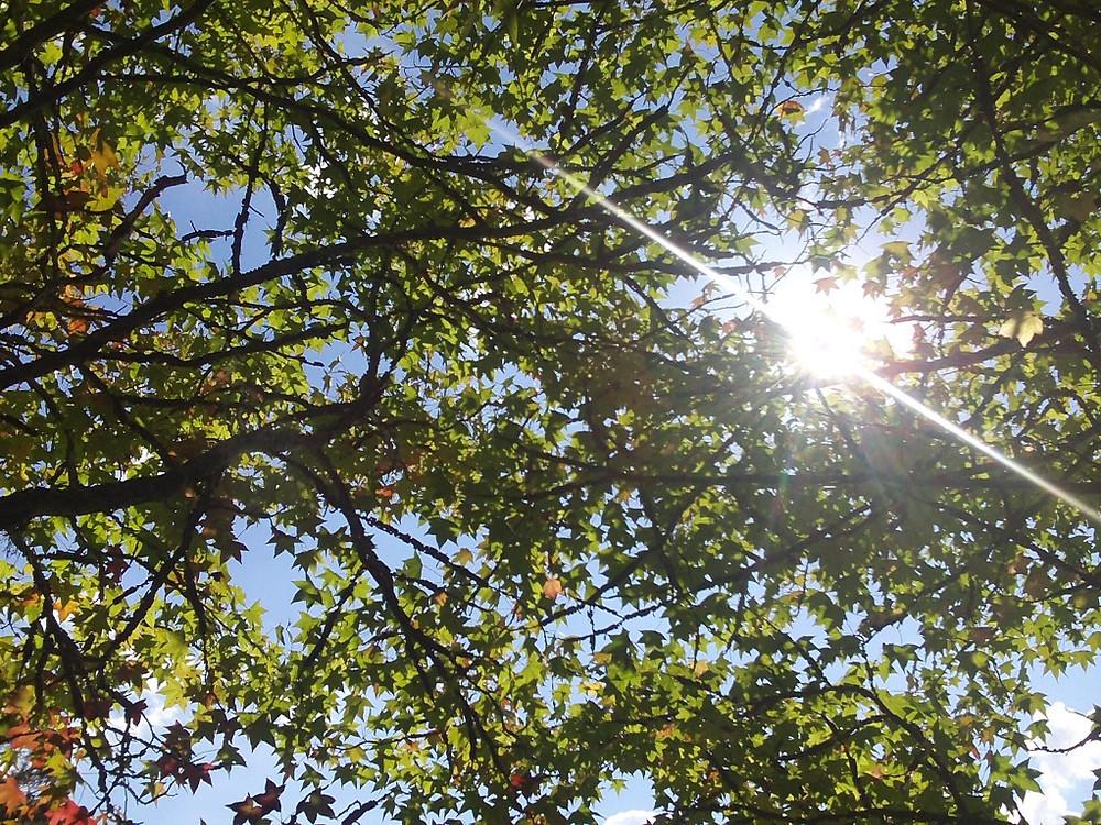 © Parque Witeck Copa das Árvores ao Sol   Foto Robriane Lara