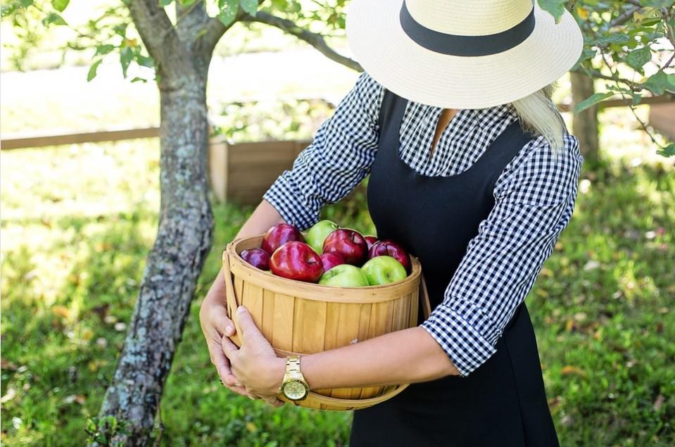Mulher com Cesto da Colheita de Maçãs Orgânicas | Foto Pixabay