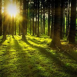 A Importância das Árvores para o Planeta