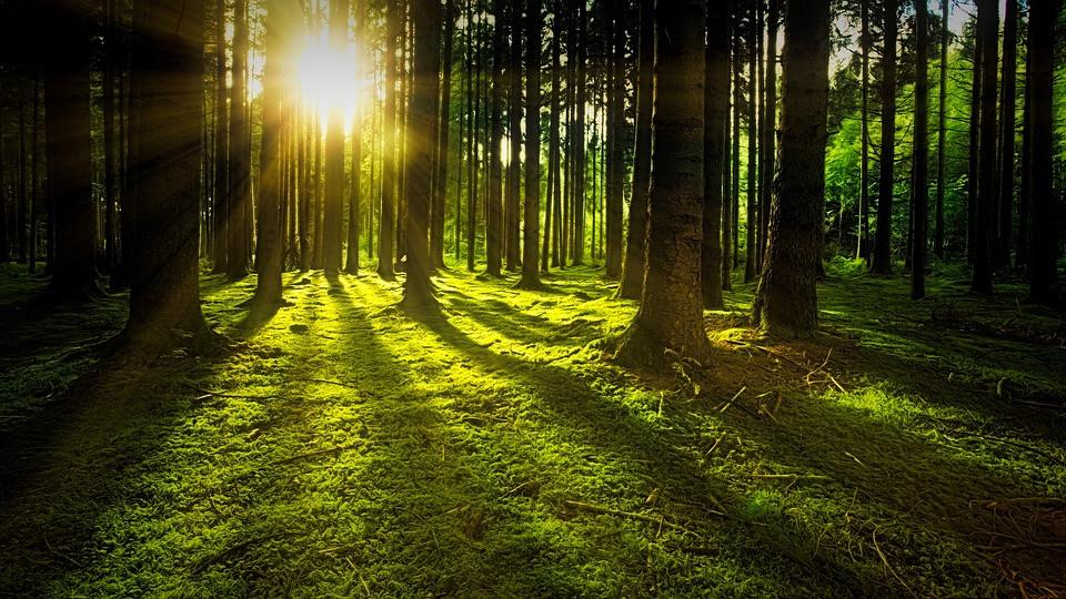 Nascer do sol entre os troncos das árvores | Foto Pixabay