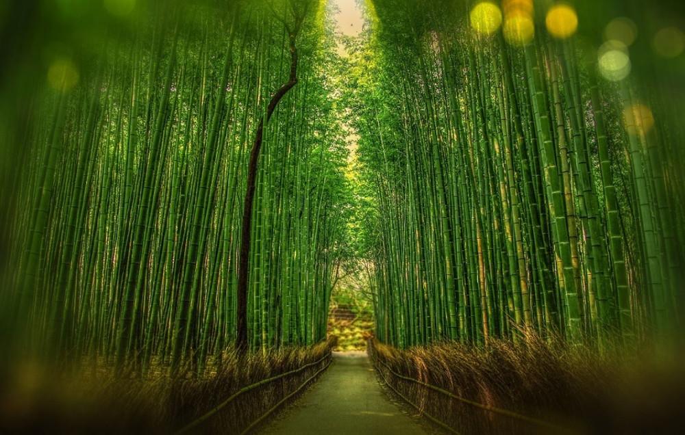 Floresta de Bambus – Japão | Foto Pexels