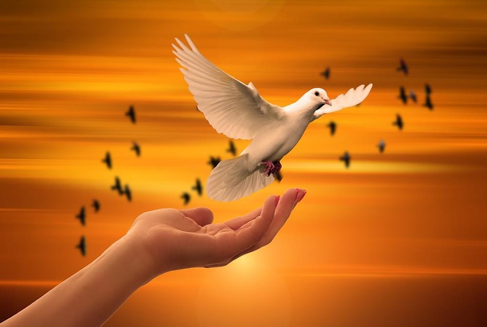 Mão de luz soltando uma pomba branca ao céu dourado | Foto Pixabay